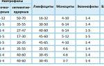 Сегментоядерные нейтрофилы у ребёнка: норма по возрасту, повышенные, пониженные показатели